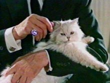 Blofeld cat